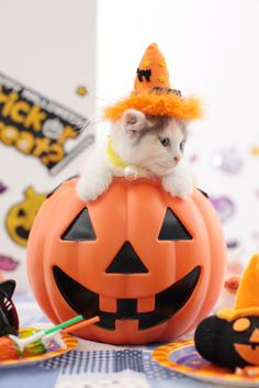 This kitten gets just as excited to dress up for fall and Halloween as you do!