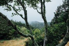 Love me some mountain side fog. My Airbnb in Inverness on my California Road trip: Tomales Bay | Emilie Waugh Photography
