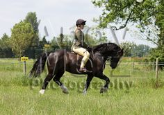 Topthorn Working Hunter 1st June 2014