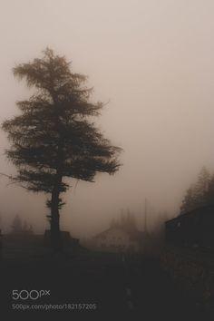 kohalmitamas:  Trees by alexandrudrasleuca