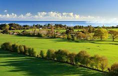 広大なフィールド、緑の草原、木、春、日当たりの良い、影、青空