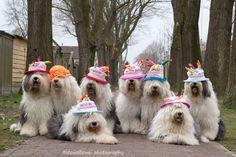 https://flic.kr/p/F5ouYe | having a birthday party...