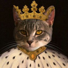 Is your kitty the king?