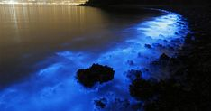 """As beautiful as this is it's cause is bad...""""On the night of January 22nd, the shores of Hong Kong glowed blue with wave upon wave of beautiful bioluminescent water in a phenomenon commonly known as Sea Sparkle. However, this magical display, caused by blooms of a microscopic dinoflagellate called Noctiluca scintillans, was brought on by something less-than-inspiring: environmental pollution."""""""