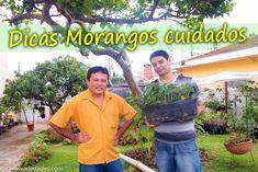 Morango Dicas e Cuidados simples e muito úteis Para Sua Casa alimento e ...