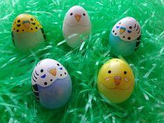 Budgie Easter Eggs