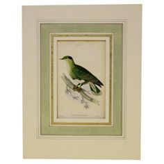 Green & Blue Turtledove, 1843