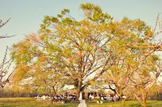 Real Kentucky Wedding: Horse Country. I want to do this soooo bad! :)