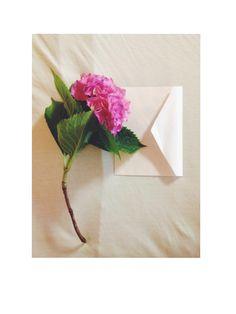 | Petals of love |   #flowerlover #whenhesendsmethis #hortensiaflower #postcardlove #photojournal #vsco #vscojournal #iphonegraphy #liveauthentic Photo Journal, My Journal, Vsco, Flowers, Photo Diary, Royal Icing Flowers, Flower, Florals, Floral