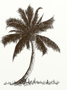 Pom Trees Drawing : trees, drawing, Learn, Coconut, Pencil, Tutorial, Drawing,, Trees, Drawing, Tutorial,
