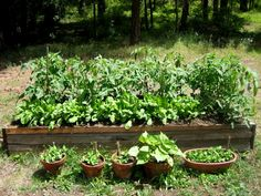 how to build a square foot garden and other helpful tips.