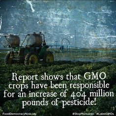 The failure of GMO-glyphosate (Roundup) tolerant crops to live up to their promises is a main contributing factor behind the development of stacked varieties of 2,4-D GE corn and soybean. So widespread is glyphosate resistance that EPA has granted emergency use exemptions for pesticides with unregistered uses in agriculture, like fluridone. Read more: http://www.righttoknow-gmo.org/news/usda-challenged-deregulation-herbicide-24-d-ge-crops #AgentOrange #Agriculture #Pesticides #RightToKnow…