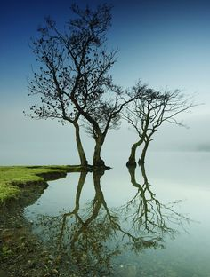 Four by Mark Littljohn. Photo, trees, water view, reflections, amazing, breathtaking, panorama