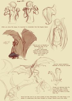 This is a spiritual sequel to Thoughts on Wings by uzlo, which is also on… Wings Drawing, Drawing Base, Creature Concept Art, Creature Design, Drawing Techniques, Drawing Tips, Wing Anatomy, Poses References, Drawing Reference Poses