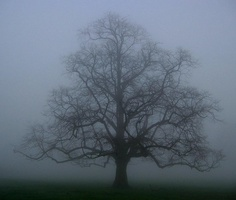 Misty oak tree - Have you ever studied how a tree grows?