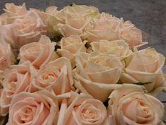 #Rose #Rosa #Mylenna: Available at www.barendsen.nl