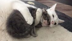 Cat hugs All the Orphaned kittens his Mom brings Home! For animal people. Pass it on.