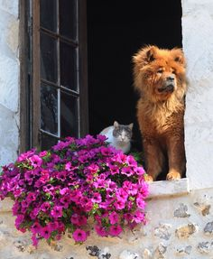 Spotted these two in the village of Giverny on the way to visit Monet's garden.