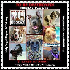 ALL THESE #BEAUTIFULDOGS WILL DIE IF NOT SAVED.THEY DESERVE TO LIVE. #HELPTHEMPLEASE