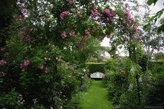 2000 different kinds of roses in Les Jardins d'Angelique, Normandy, France. Photo by Alicia Sivertsson, 2012.