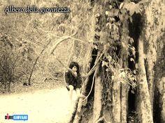 Albero della giovinezza - Youthness Tree