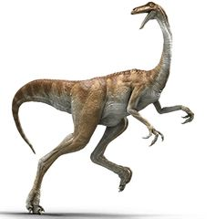 Gallimimus was very tall and could run fast. They were featured in the Jurassic Park movies.