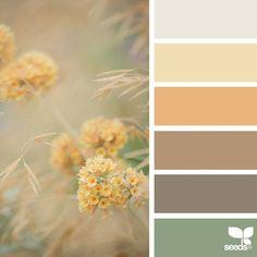 Design seeds color palettes posted daily for all who love color. Design Seeds, Palette Design, Nature Color Palette, Colour Palettes, Colors Of Nature, Summer Colour Palette, Decoration Palette, Room Color Schemes, Vintage Color Schemes