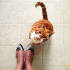 shoes & kitty :)
