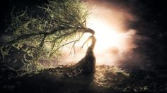 Beautiful-Tree-Wizard-The-Sun-Bright-Creative-Design.jpg (1920×1080)