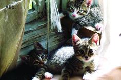 Dovanojami kačiukai — Alio.lt