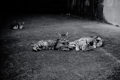 cats family Photo by Akihisa Ono — National Geographic Your Shot