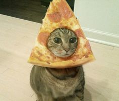 Here is a picture of a cat with pizza on it's face. Have a nice day.