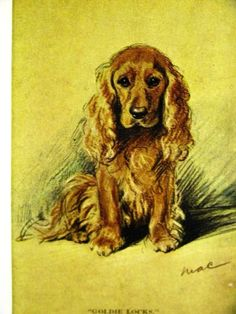 Lucy Dawson GOLDEN COCKER SPANIEL Original Collectors Card 1930-40s Print Matted