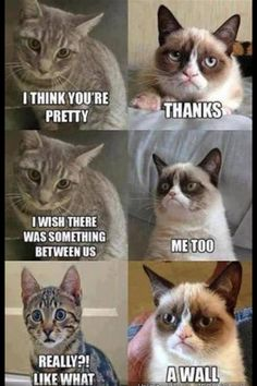 Do you love Grumpy cat. If you do, These Grumpy cat Memes work for you.These Grumpy cat Memes work are so funny and humor. Grumpy Cat Quotes, Funny Grumpy Cat Memes, Funny Animal Jokes, Cat Jokes, Cute Funny Animals, Funny Relatable Memes, Funny Animal Pictures, Funny Jokes, Funny Cats