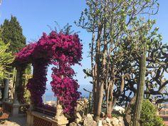 Jardin exotique de Monaco.