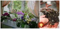Ide o skvelý tip, ktorý sa bude hodiť aj vám! Ladder Decor, Ale, Euro, Plants, Indoor Gardening, Ale Beer, Plant, Ales, Planets