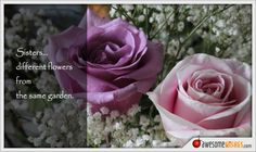 Sisters… different flowers from the same garden. Sister Birthday, Birthday Wishes, Different Flowers, Sisters, Rose, Garden, Quotes, Plants, Quotations