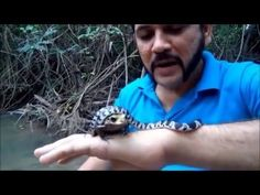 "Watch how this crazy man put a snake and frog (both poisonous) in his mouth to protest deforestation in the Amazon. The snake and frog the man put inside his mouth were venomous blue krait and a poisonous dart frog respectively. I did not see that kind of protest before! Did you ever see a protest that risked life, share your experience via comments. Share this video with as many as you can to spread the words, ""Stop Deforestation."""