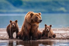 Photo Family portrait in the open air par Sergey Ivanov on 500px
