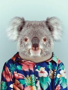 Koala ready to hit the beach -  by Yago Partal