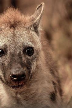 Featured photo by Frans Van Heerden. More work by Frans on Pexels at https://www.pexels.com/u/frans-van-heerden-201846/ #nature #animal #eyes