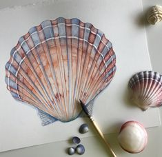 Seashell print of watercolor painting SS18917 A3 size
