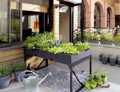 Para cultivar un huerto en plena ciudad solo necesitas un lugar soleado ¡Anímate a cultivar tus propias hortalizas!