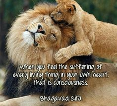 Compassion Bhagavad Gita, Consciousness, Compassion, Lions, Food Ethics, How Are You Feeling, Feelings, Deep, Inspirational