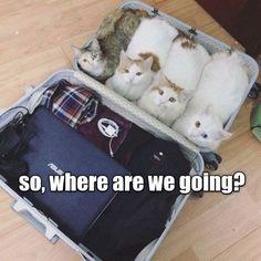 Resultado de imagem para silly cats