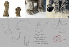 Warrior Cats Series, Warrior Cats Fan Art, Art Reference Poses, Drawing Reference, Cat Drawing, Drawing Ideas, Cute Animal Drawings, Really Funny Memes, Art Tips