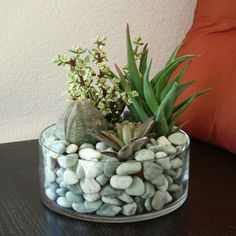 Google Image Result for http://www.cactuscollection.com/inspirations/images/succulent_rocks_in_glass.jpg