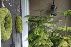 The greening! #Christmasideas