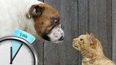 Коты против собак / Cats & Dogs