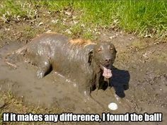 Dogs + Mud = Dog´s Heaven